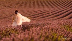 Just Married (Valensole - France)