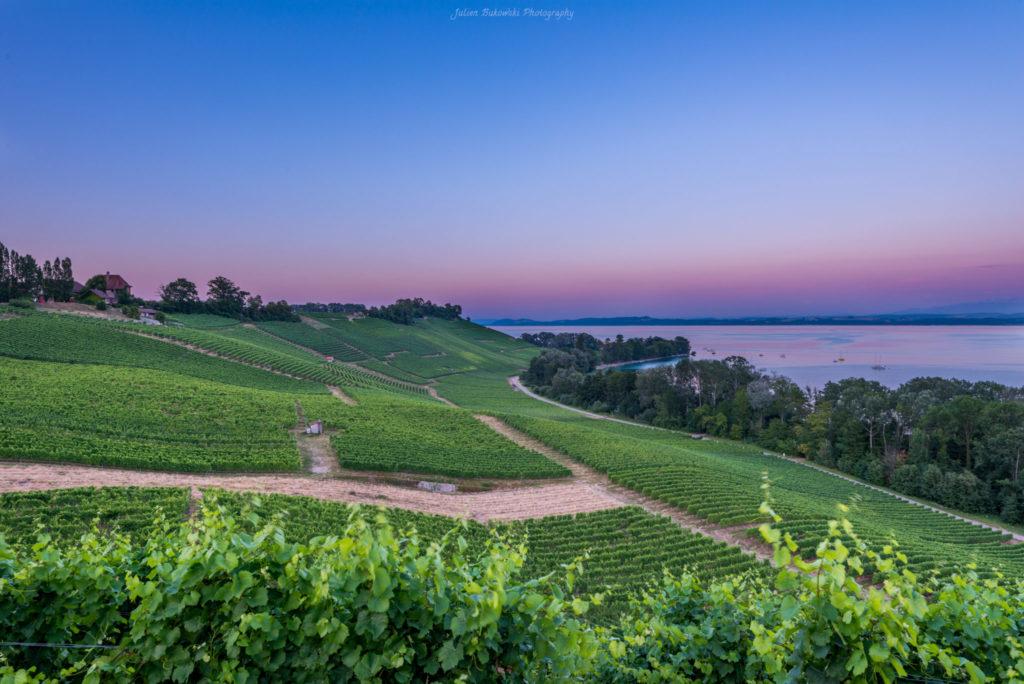 Vignes de Bevaix (Suisse)