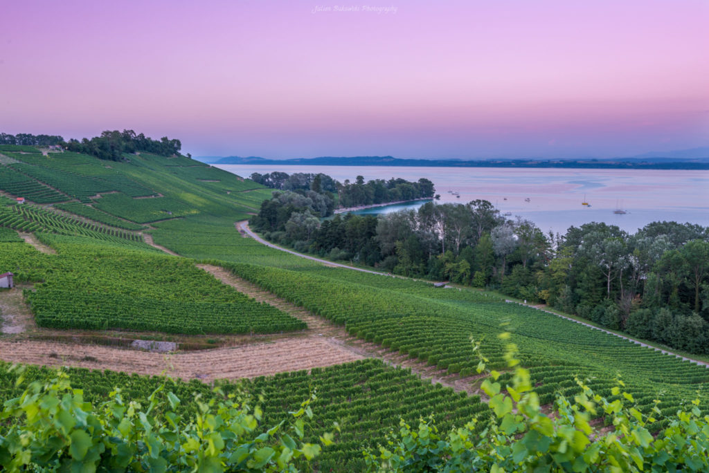 Vignobles (Suisse)