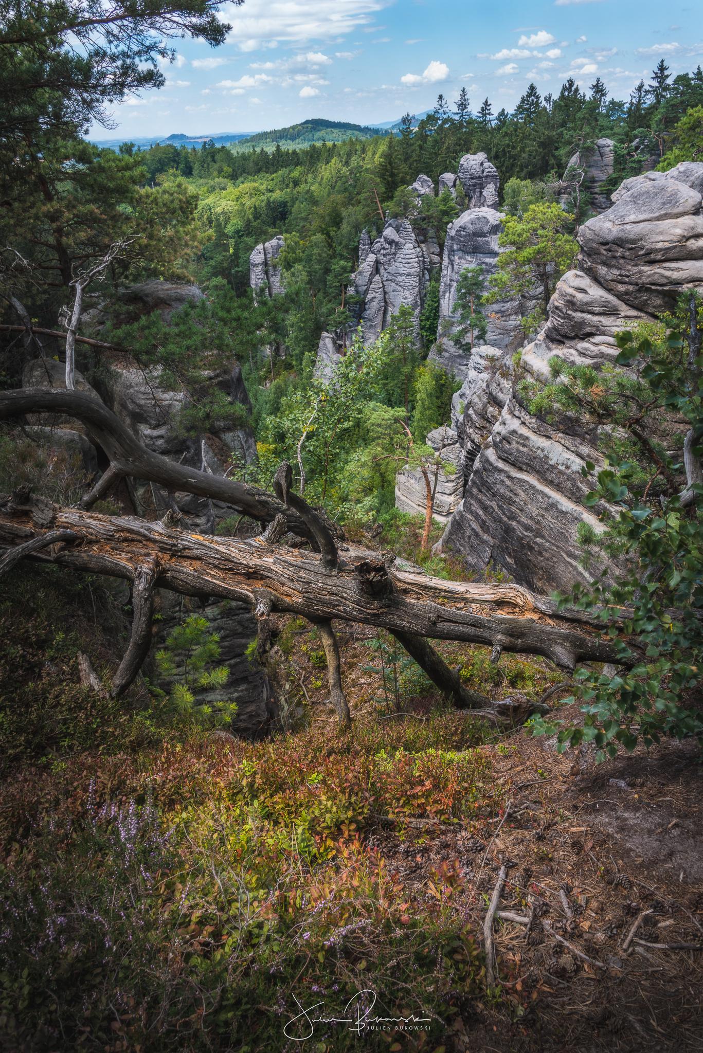 Prachovske Skaly-République Tchèque-Tchéquie-Canyon-arbres-réserve naturelle-rochers-tirage photo-Julien Bukowski-photo art