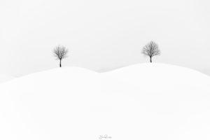 Quiet trees (Zoug - Suisse)