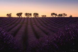 Belle Provence (Valensole - France)
